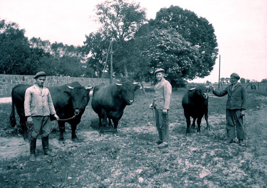 10.15  Ukendt landbrug.  Der står 1934 på æsken.