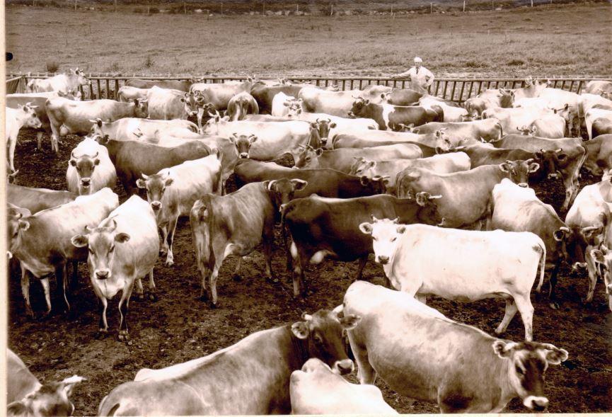 71.6 Ukendt landbrug